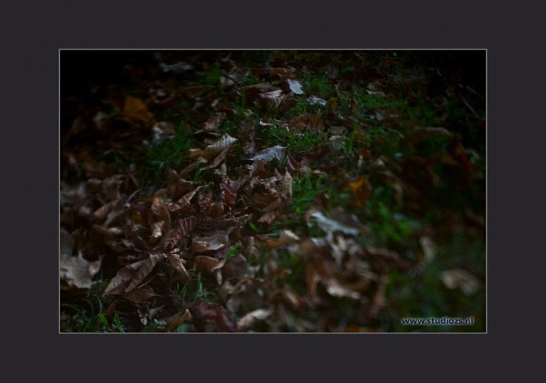 Vergankelijkheid -- Herfstkleuren op Buitenplaats Ockenburg