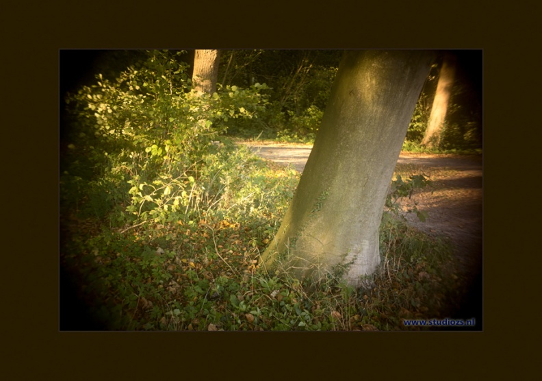 Een rustig bos  -- Herfstkleuren op Buitenplaats Ockenburg