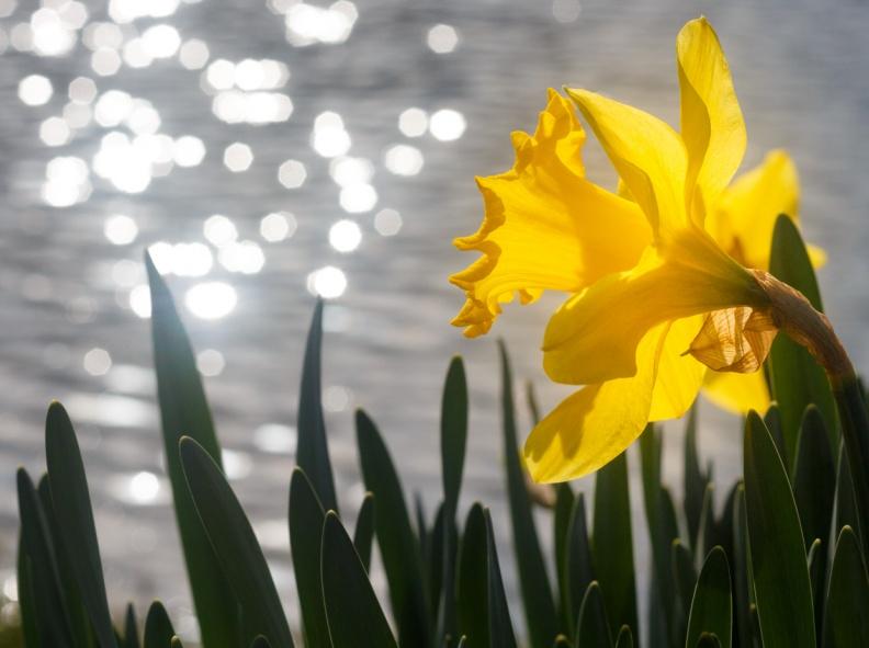 Henk-Jan - Narcis