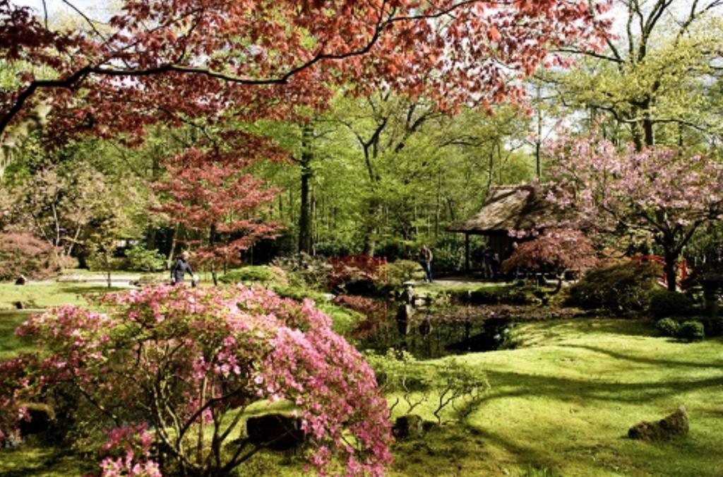 Openstelling Japanse Tuin @ Den Haag | Zuid-Holland | Nederland